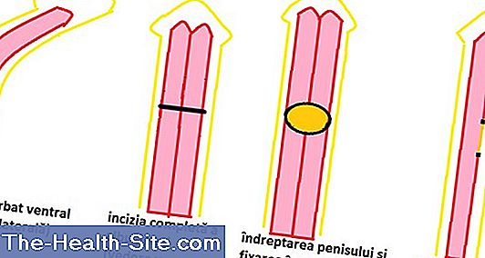 dimensiunile medii ale penisului