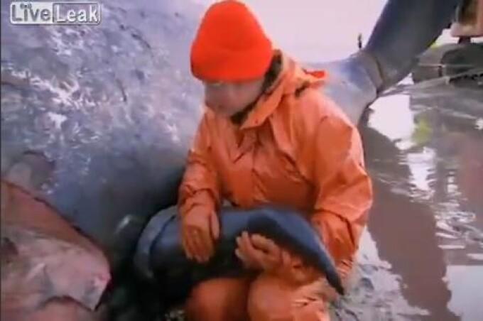 penisul în balene ucigașe