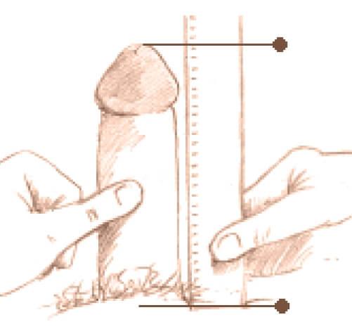 penis ușor îndoit