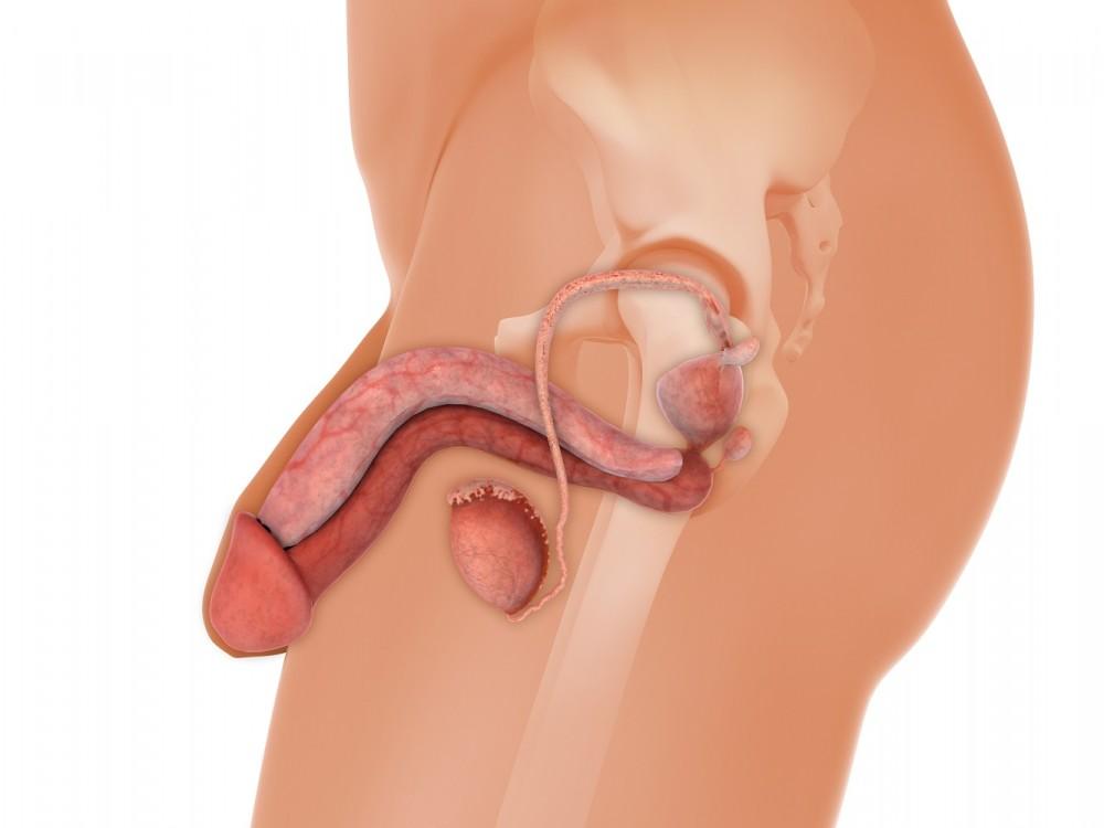 exercițiu la domiciliu pentru mărirea penisului ce trebuie făcut dacă penisul a scăzut