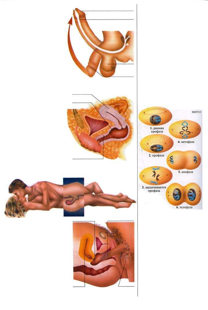 produsul induce o erecție mărirea penisului în moduri simple