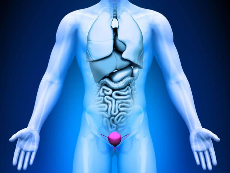 erecție cu boală de prostată erecție matinală cu prostatită