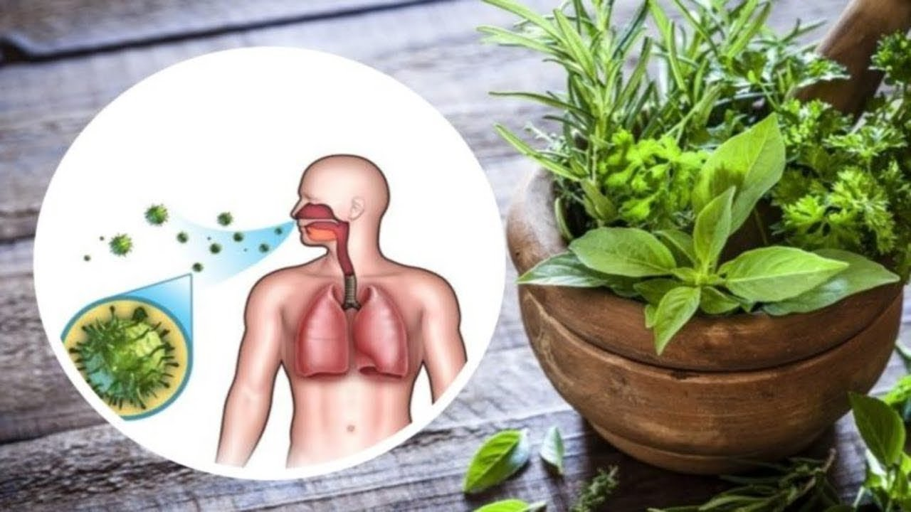 plante crescute de erecție