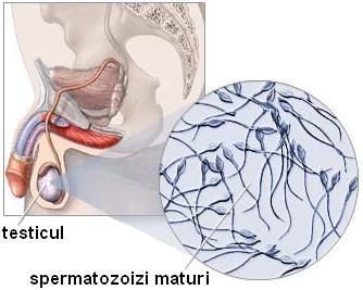 Testiculul necoborât – tratament chirurgical