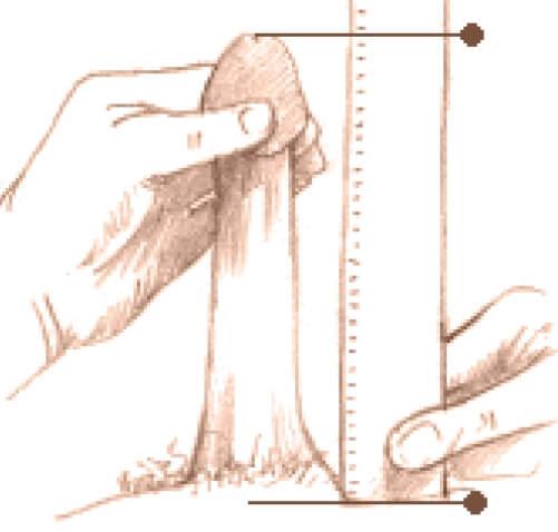 care este dimensiunea normală a penisului în stare erectă