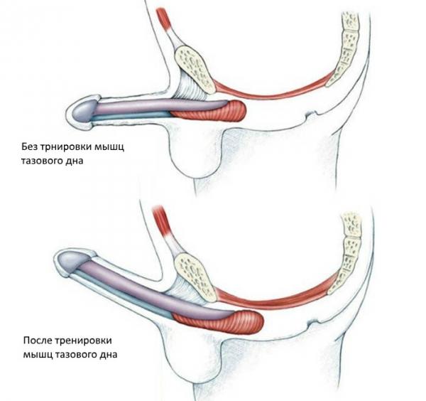 Stimulente Erectie - Pastile Pentru Sex