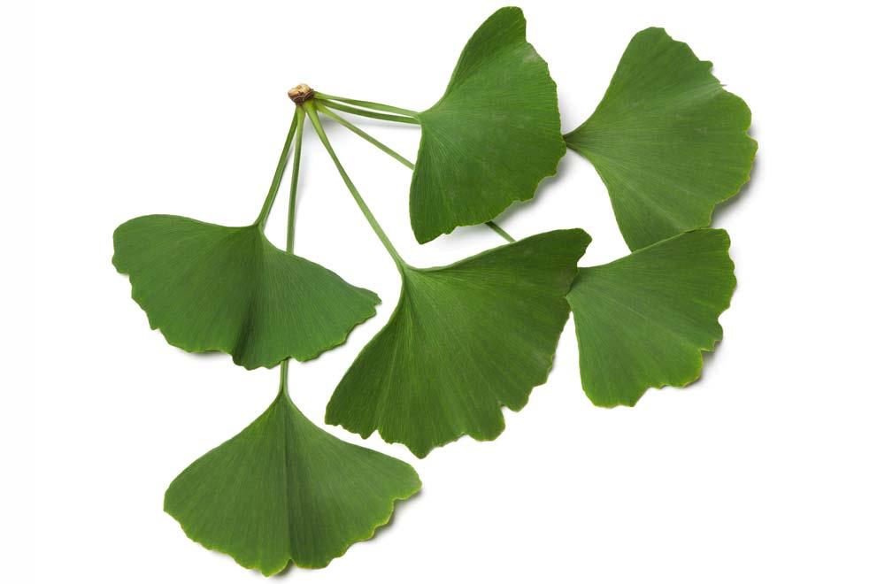 ce planta imbunatateste erectia
