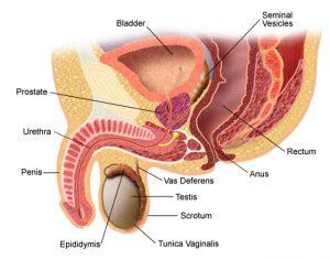 prostatită cronică și disfuncție erectilă când conduceți în montajul mașinii