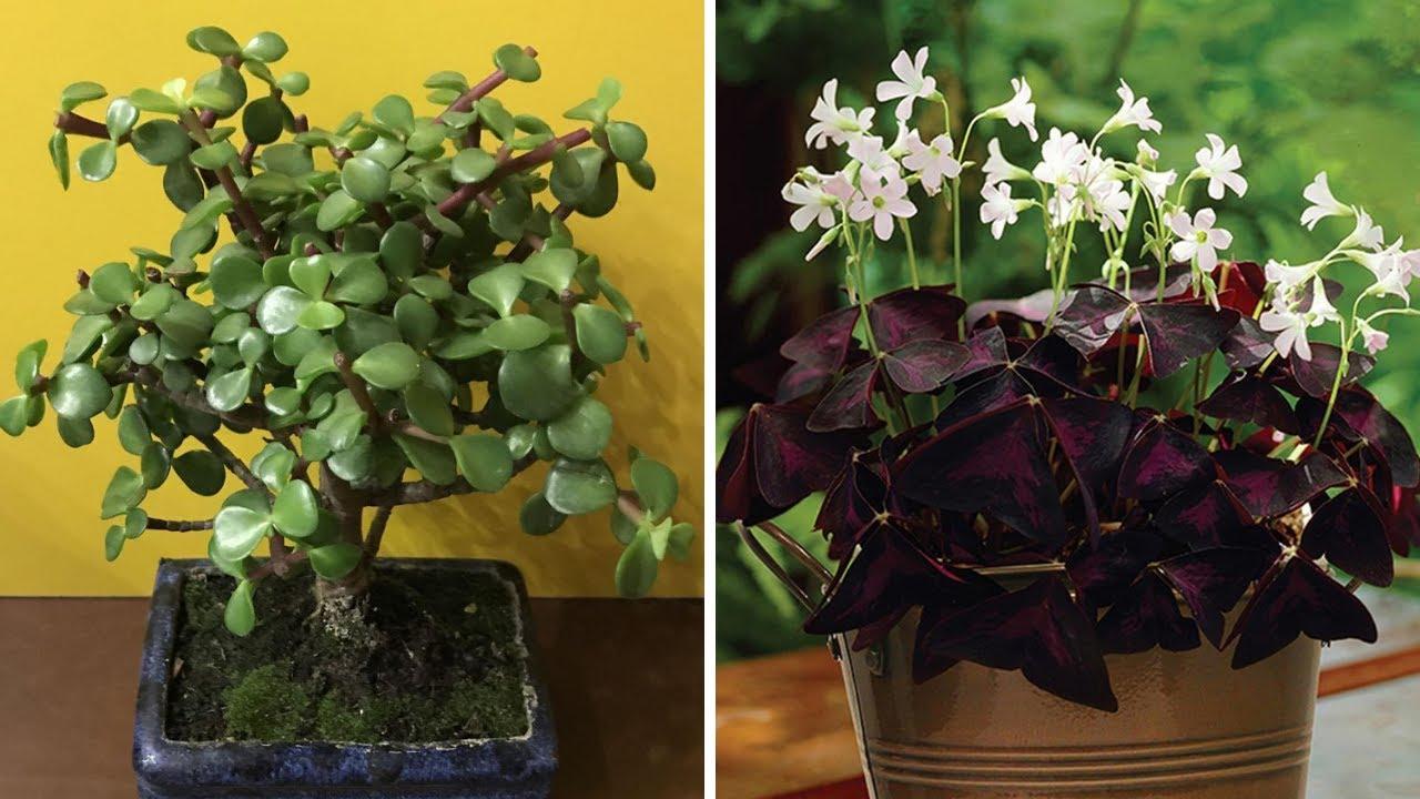 plante care cresc erecția