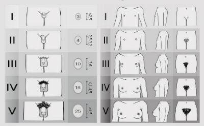 penisuri de rase diferite